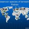 Pet travel regulations
